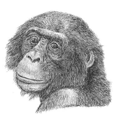 Digital Art - Bonobo by Steve Breslow