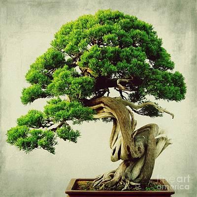 Bonsai - 1 Art Print by MingTa Li