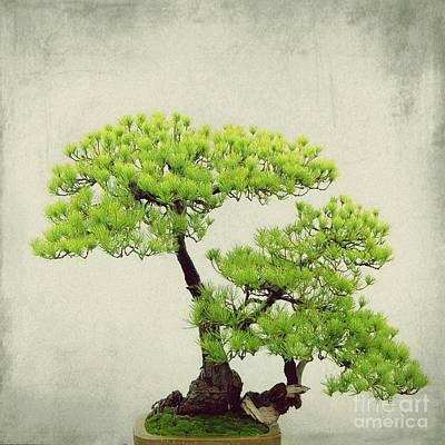 Bonsai - 2 Art Print by MingTa Li