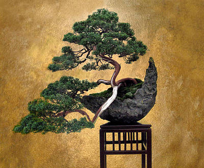 Photograph - Bonsai 3 by Jessica Jenney