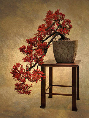 Golden Digital Art - Bonsai Beauty by Jessica Jenney