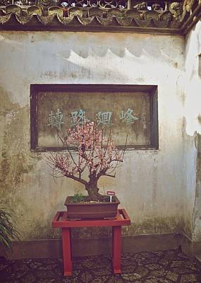 Photograph - Bonsai Cherry Tree by Matt MacMillan