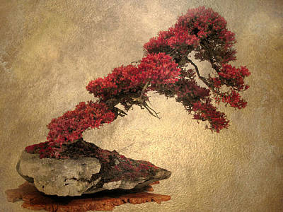 Photograph - Bonsai Display by Jessica Jenney