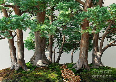 Photograph - Bonsai Forest by Larry Ward