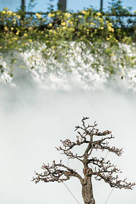 Photograph - Bonsai Garden by Valerie Rosen