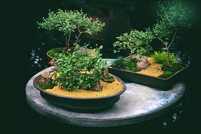 Exhibit Photograph - Bonsai Island by Jessica Jenney