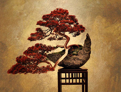 Planter Wall Art - Photograph - Bonsai  by Jessica Jenney