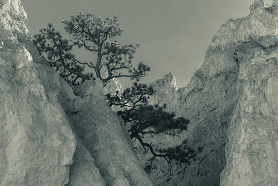 Photograph - Bonsai  by Jonathan Nguyen