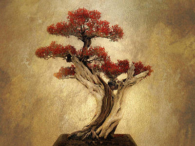 Photograph - Bonsai Pine by Jessica Jenney