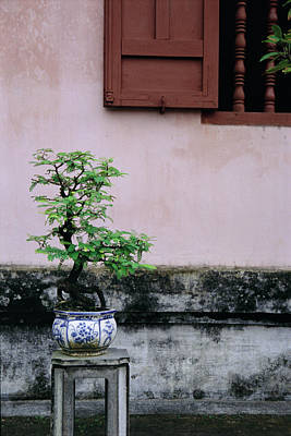 Photograph - Bonsai Tree by Ken Aaron