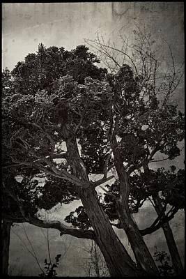 Photograph - Bonsai Tree by Michelle Calkins