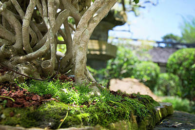 Photograph - Bonsai View by Vanessa Valdes