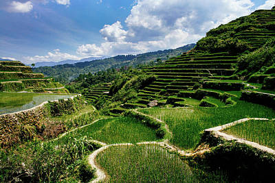 Photograph - Bontoc Rice Terraces by Roy Cruz