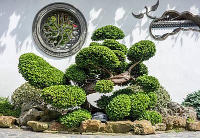 Photograph - Bonzai Hinoki Cypress by Arterra Picture Library