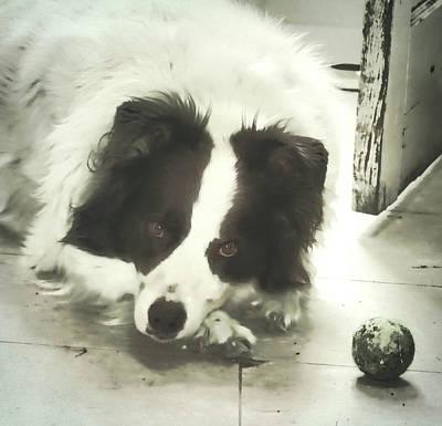 Photograph -  Boo And His Ball by Aliceann Carlton