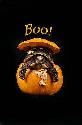 Reptiles Royalty-Free and Rights-Managed Images - Boo Halloween Turtle by Rebecca Brittain