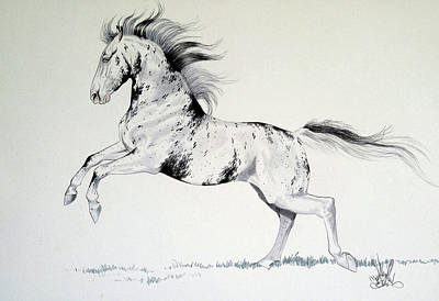 Drawing - Loud Appaloosa by Cheryl Poland