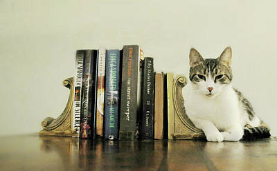 Gray Tabby Photograph - Book Smart Cat by Diana Angstadt