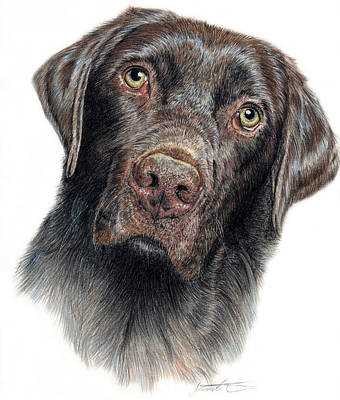 Colored Pencil Portrait Drawing - Boomer by Joanne Stevens
