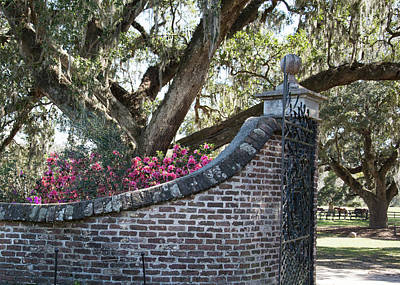 Photograph - Boone Hall  by Ed Waldrop