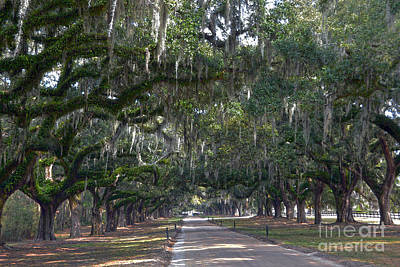 Photograph - Boone Hall Plantation Live Oak Corridor by Catherine Sherman