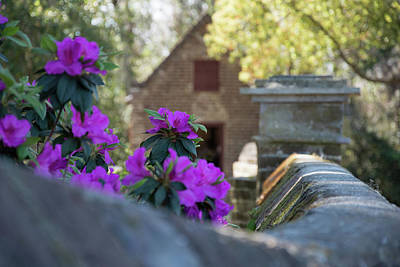 Photograph - Boone Hall Spring by Ed Waldrop