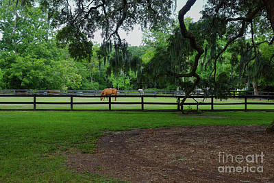 Photograph - Boone Hall Stables by Jennifer White