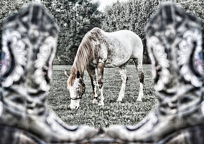 Photograph - Booted Gelding by Sharon Popek