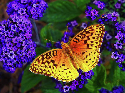 Photograph - Boothbay Butterfly by ABeautifulSky Photography by Bill Caldwell