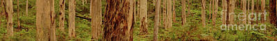 Photograph - Boranup Forest Panorama II by Cassandra Buckley