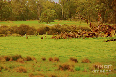 Photograph - Boranup Pasture II by Cassandra Buckley