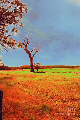 Photograph - Boranup Pasture IIi by Cassandra Buckley
