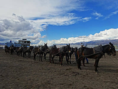 Photograph - Borax Twenty  Mule Team by Jacqueline  DiAnne Wasson