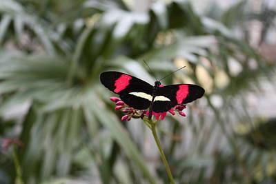 Borboleta Butterfly Art Print