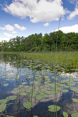 Photograph - Borden Lake Lily Pads by Gary Eason