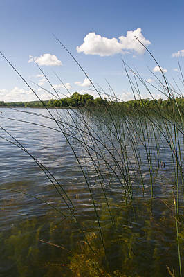 Photograph - Borden Lake Reeds by Gary Eason