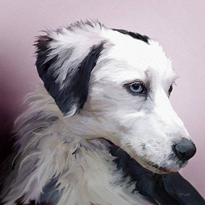Digital Art - Border Collie by Bamalam Photography