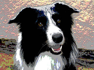 Mixed Media - Border Collie by Charles Shoup