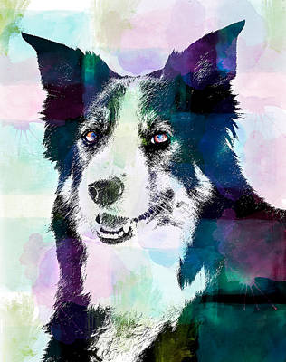 Photograph - Border Collie Graphic by Joye Ardyn Durham