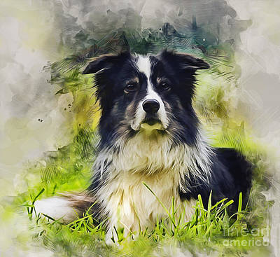 Mixed Media - Border Collie by Ian Mitchell