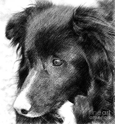 Border Collie In Pencil Art Print by Smilin Eyes  Treasures