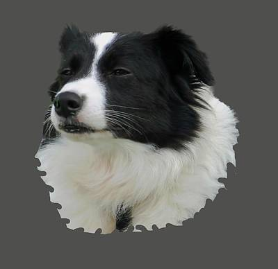Photograph - Border Collie by Pamela Walton