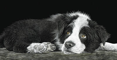 Drawing - Border Collie Pup for Limited Items by Ann Ranlett