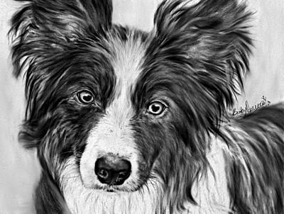Scottish Dog Drawing - Border Collie Stare by Becky Herrera