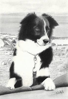 Drawing - Border Collie by Stuart Attwell