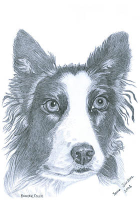 Drawing - Border Collie by Yvonne Johnstone
