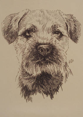 Purebred Dogs Drawing - Border Terrier by Barbara Keith