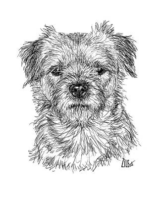 Digital Art - Border Terrier @borderterrieri_martta by ZileArt