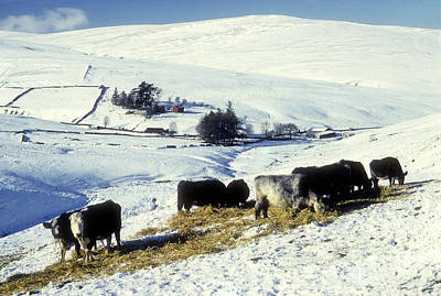 Photograph - Borders Winter - Scotland by Phil Banks