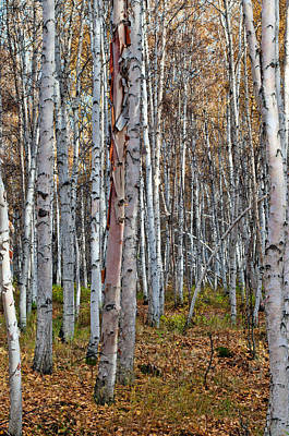 Photograph - Boreal Forest In Fall 2 - Creamers Field by Cathy Mahnke